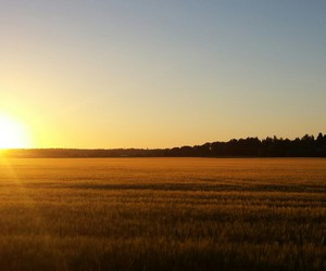 field, sun, and nature image