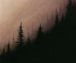 dark, gloomy, and forest image