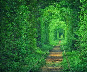 green, nature, and tunnel image