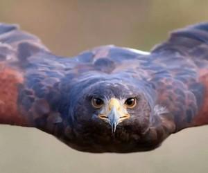 animal, bird, and fly image