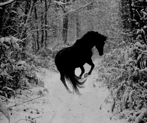 black beauty, forest, and horse image