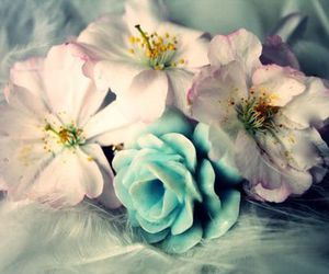 blue, flower, and sweet image