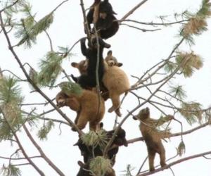 bear, tree, and animal image