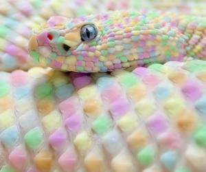 cobra, colorfull, and colorida image