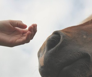beautiful, hand, and horse image