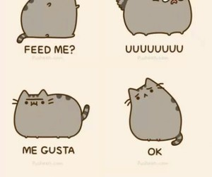 cat, meme, and pusheen image