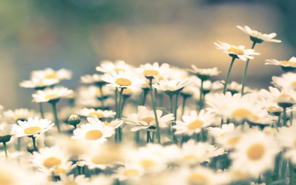 Flowers Uploaded By Aesthetic Bae On We Heart It