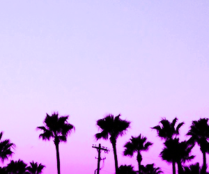 header, twitter, and purple image