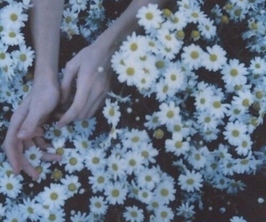 daisies, indie, and retro image