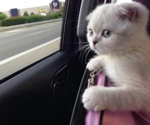 Taylor Swift, olivia benson, and cat image
