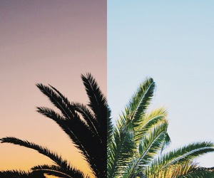 summer, palm, and sun image