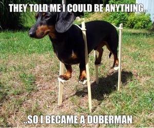 dog, doberman, and funny image