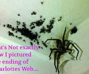 Charlottes Web, creepy, and facebook image