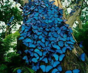 butterfly, blue, and tree image