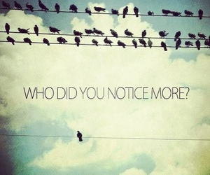 bird, quotes, and different image