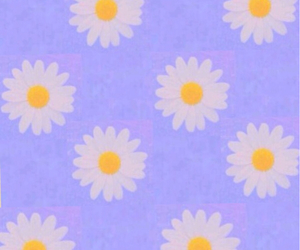 background, cool, and daisy image