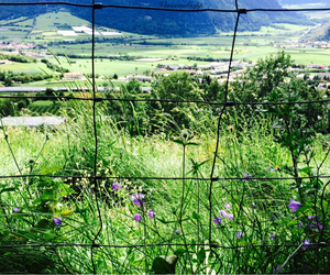beautiful, fence, and flowers image