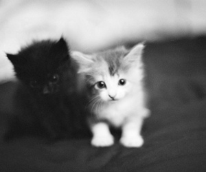 black and white, kitten, and cute image