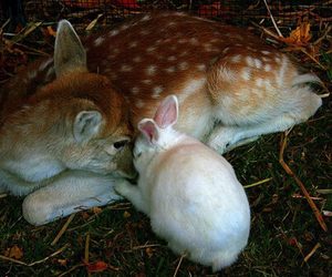 deer, bunny, and cute image