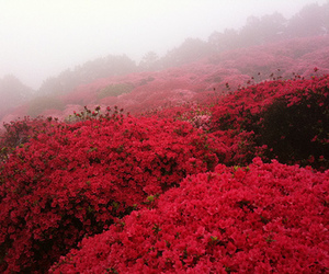beautiful, photography, and red image