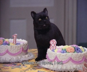 cat, salem, and quotes image