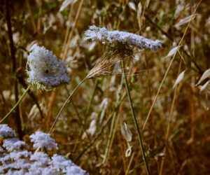 flower, italy, and grass image