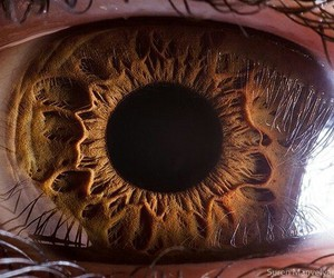 awesome, close up, and brown image