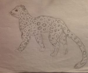 drawings snow leopard image
