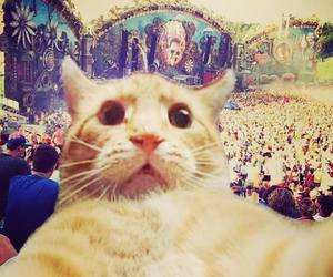 cat, Tomorrowland, and selfie image