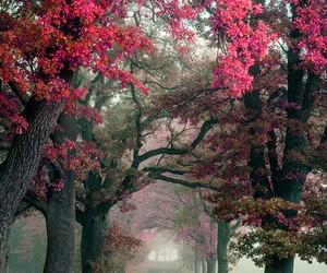 amazing, place, and beautiful image