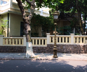 scenery, a streetlamp, and tree image