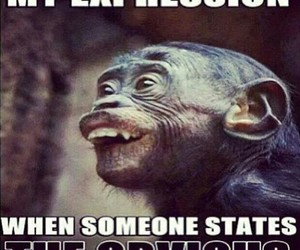 funny, monkey, and obvious image