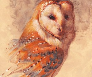 art, owl, and lovely image