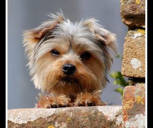 mischievous and cute awe puppy image