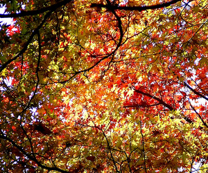 autumn, tree, and photography image