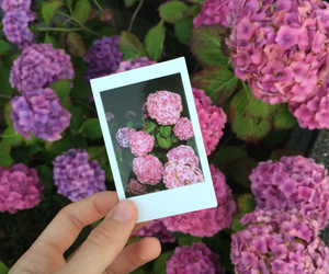 flowers, fujifilm, and photo image