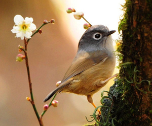 bird, flower, and nature image