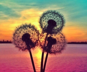 flowers, sunset, and summer image
