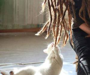 cat, dreads, and hair image