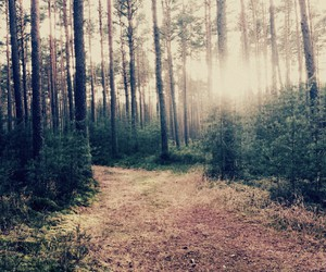 day, forest, and nature image