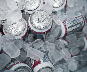 beer, Budweiser, and ice image