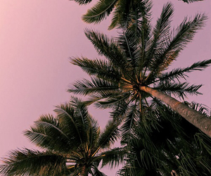 palms, pink, and wallpaper image