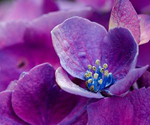 bokeh, flower, and macro image