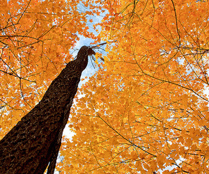 tree, fall, and leaves image