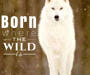 born, wild, and wolf image