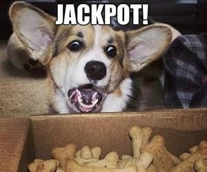 dog, funny, and Jackpot image