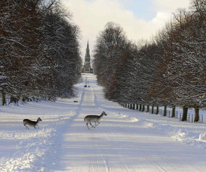 deer, fountains abbey, and park image