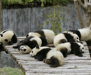 asian, cute, and bamboo image