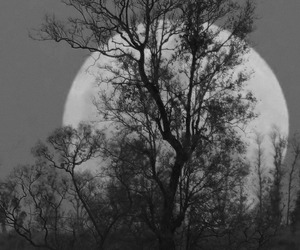 tree, moon, and black and white image