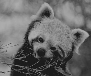 animal, animals, and nature image